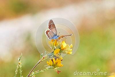 Macro photo of a butterfly close-up. A butterfly sits on a flower. The moth sits on a flower and drinks nectar. A photo of a moth
