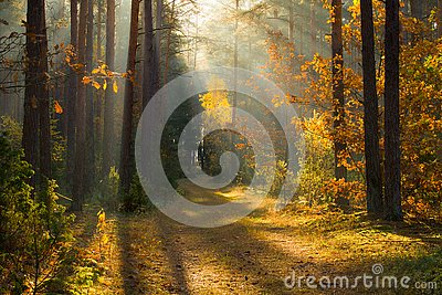 Autumn. Autumn forest. Forest with sunlight. Path in forest through trees with vivid colorful leaves. Beautiful fall background.