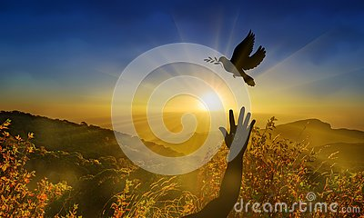 Freedom, peace and spirituality dove, pigeon with olive branch