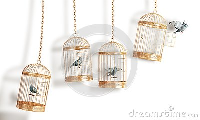 Success concept. Open bird`s cell isolation on a white background