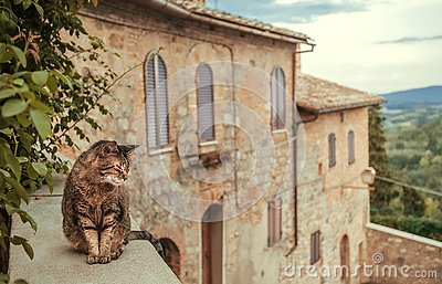 Cat chilling inside courtyard of rural house ot mansion at evening Tuscany. Green trees, hills of countryside of Italy