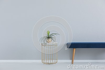 Green plant in golden pot and blue velvet settee, real photo with copy space