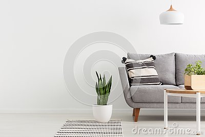 Grey sofa in white living room interior with copy space on empty wall. Real photo