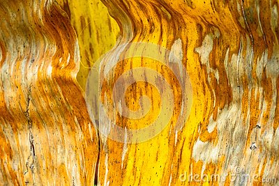 Patterns and textures banana leaves, colorful green, yellow and dry.Closeup of banana leaf texture abstract background selective f