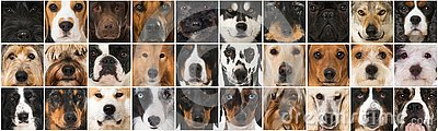 Collage of many different breed dog heads