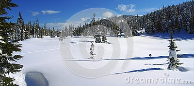 Ski Track in Paradise Meadows, Forbidden Plateau, Strathcona Provincial Park, Vancouver Island, British Columbia, Canada
