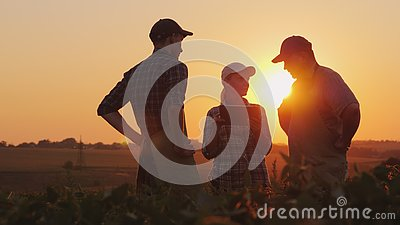 stock image of a group of farmers are discussing in the field, using a tablet. two men and one woman. team work in agribusiness