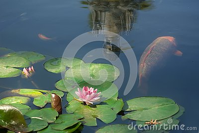 pond with fish and reflection of buddha statue image of christmas decorations close up