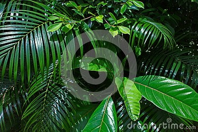 Branches Tropical Leaf Sunny Green Saturated Background