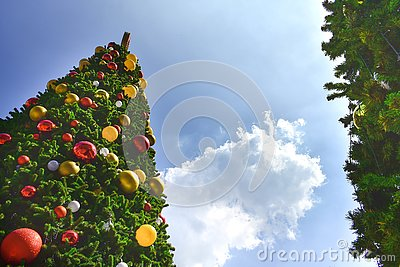 Low angle view of big Christmas trees and cloud sky in the background.