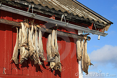 Rorbu & stockfish of Lofoten