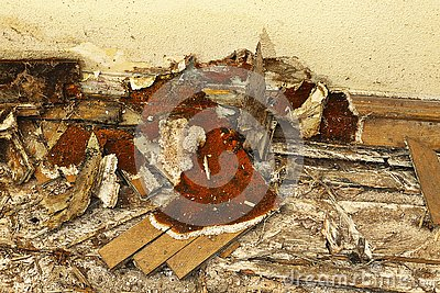 Wooden floor decayed by dry rot