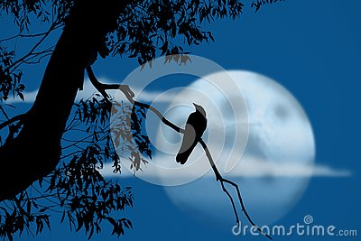 Bird at night in front of full moon
