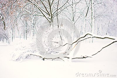 Winter nature background, landscape. Winter forest, park with snowy fallen trees. Winter bad weather, storm, blizzard, snow drifts