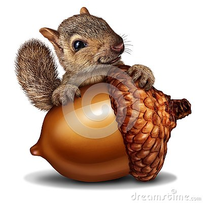 Funny Squirrel holding a Giant Acorn