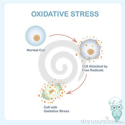 Oxidative stress scheme. Healthy cell caused by an attack of free radicals