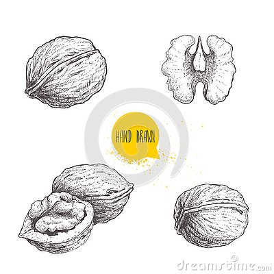 Hand drawn sketch style walnuts set. Single whole, half and walnut seed. Eco healthy food vector illustration. Isolated on white