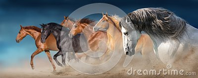 Horse herd run in sand