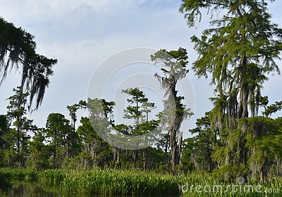 Lush Fauna Thriving in the Southern Louisiana Wetlands
