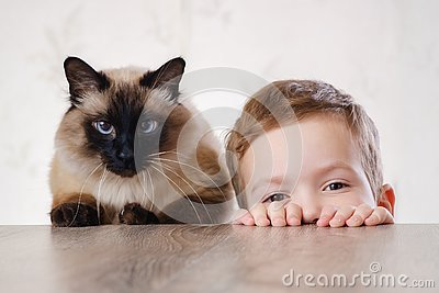 Cat child balinese together play. animal cute