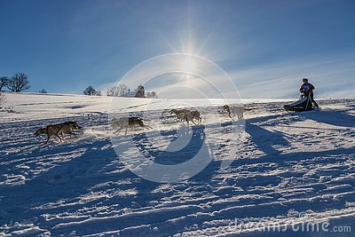 A team of four husky sled dogs running on a snowy wilderness road.