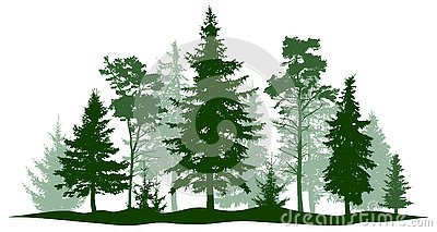 Evergreen forest pine, tree isolated. Park, alley Christmas tree. Vector illustration.