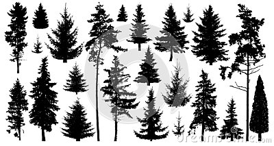 Silhouette of pine trees. Set of forest trees isolated on white background. Collection coniferous evergreen forest trees.