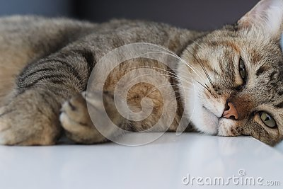 stock image of the lazy cat is sleeping on the bed