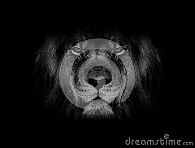 Lion face black and white wallpaper
