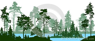 Evergreen coniferous forest with pines, fir trees, christmas tree, cedar, Scotch fir. Forest silhouette trees. Lake river vector