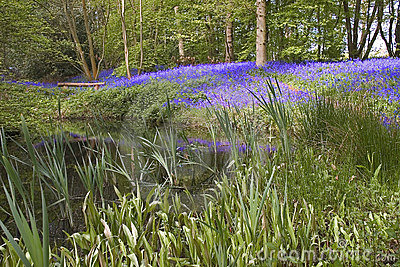 Bluebell lake