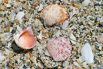 Colorful Shells on Beach
