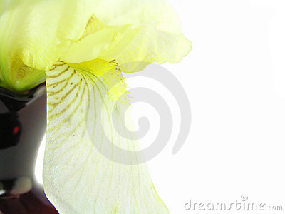 Iris with red vase abstract
