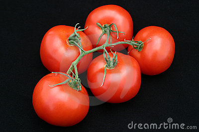 Perfect Red Tomato Bunch