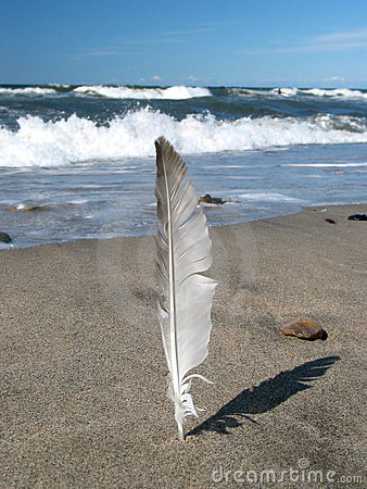Feather on the beach (clean)