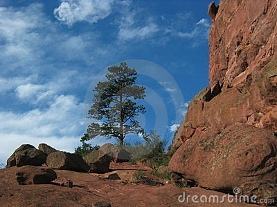 Red Rock Ampitheater with Pine