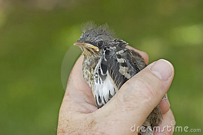 Bird in the hand ... kold