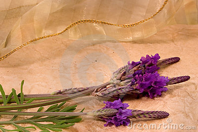 Lavendar and Lace