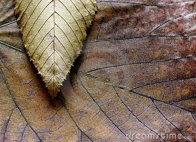 Leaves texture composition