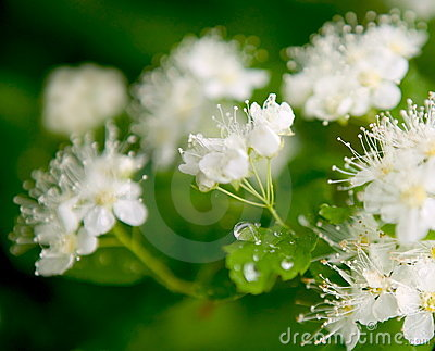 Flowers and water drop