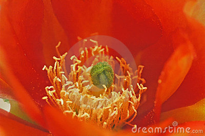 Orange Cactus Flower