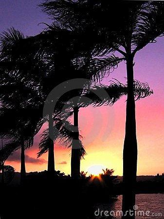 Sunset over Palm Trees