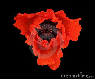 The Red  Poppy