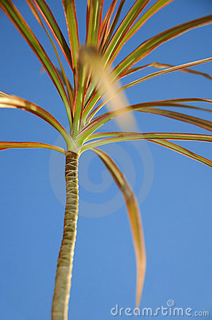 Colourful palmtree