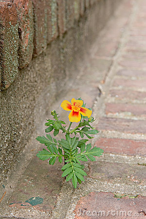 Flower growing between bricks