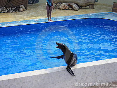 Seal on the pool