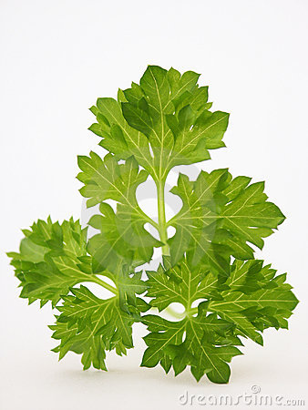 Tops of parsley