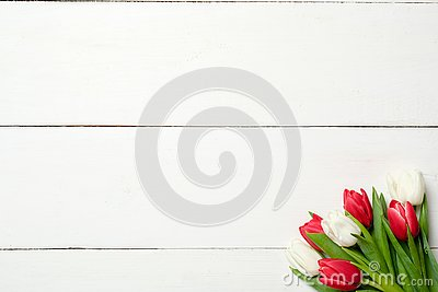 Bouquet of tulips at right corner on white wooden background . Top view, frame, border, copy space. Greeting card for womans day,