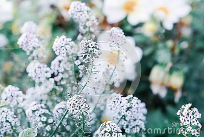 Gentle white flowers
