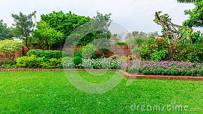 Beautiful English cottage garden, colorful flowering plant on smooth green grass lawn and group of evergreen trees